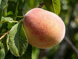 Laser Away the Peach Fuzz Before Summer